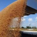 Россия более чем на 60 % увеличила экспорт зерна