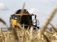 Правительство ввело пошлины на экспорт пшеницы с 1 февраля 2015 года