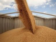 Зернотрейдеры просят досрочно отменить экспортные пошлины на пшеницу