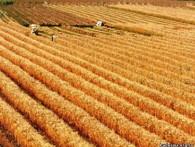 Дворкович объявил о досрочной отмене экспортных пошлин на зерно