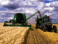 Правительство утвердило с 1 июля новую пошлину на экспорт пшеницы