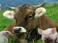 Домашним хозяйствам хотят ограничить численность скота и птицы